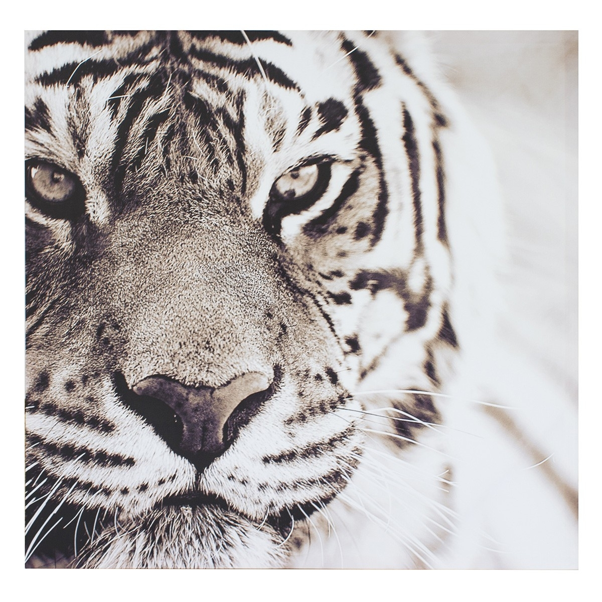 Prints White Tiger 90 X 90 Cm | Wall Art | Jysk Canada For Most Recently Released Jysk Canvas Wall Art (View 6 of 15)