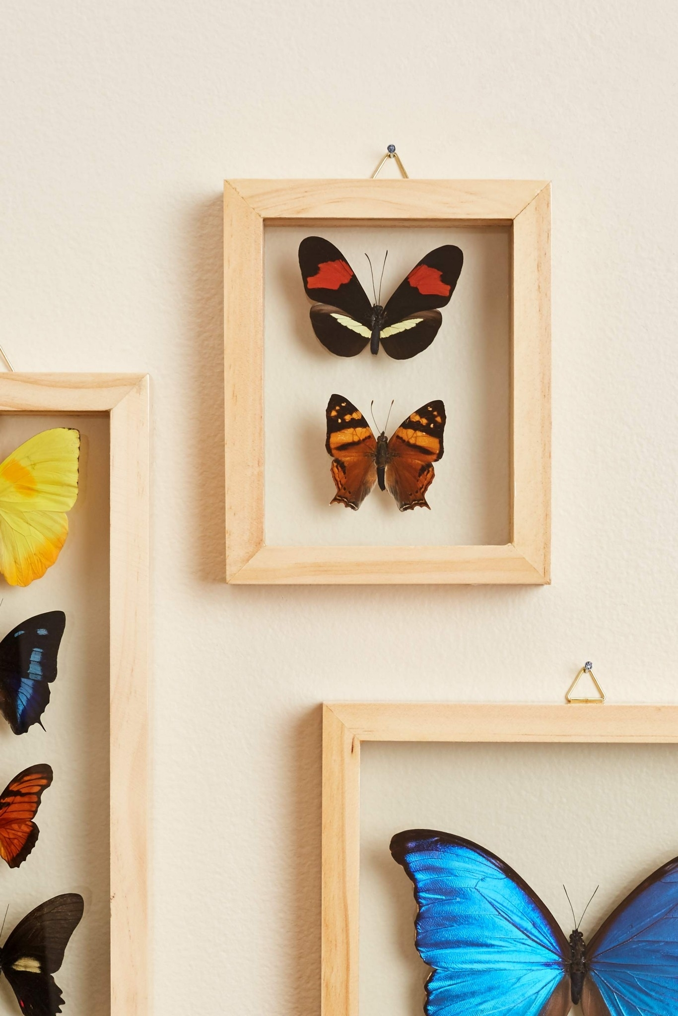 Search Results For: 'butterflies' – Earthbound Trading Co (View 10 of 15)
