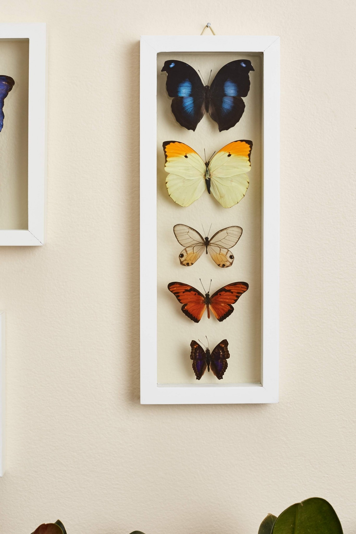 Search Results For: 'butterflies' – Earthbound Trading Co. Pertaining To 2018 Earthbound Canvas Wall Art (Gallery 8 of 15)