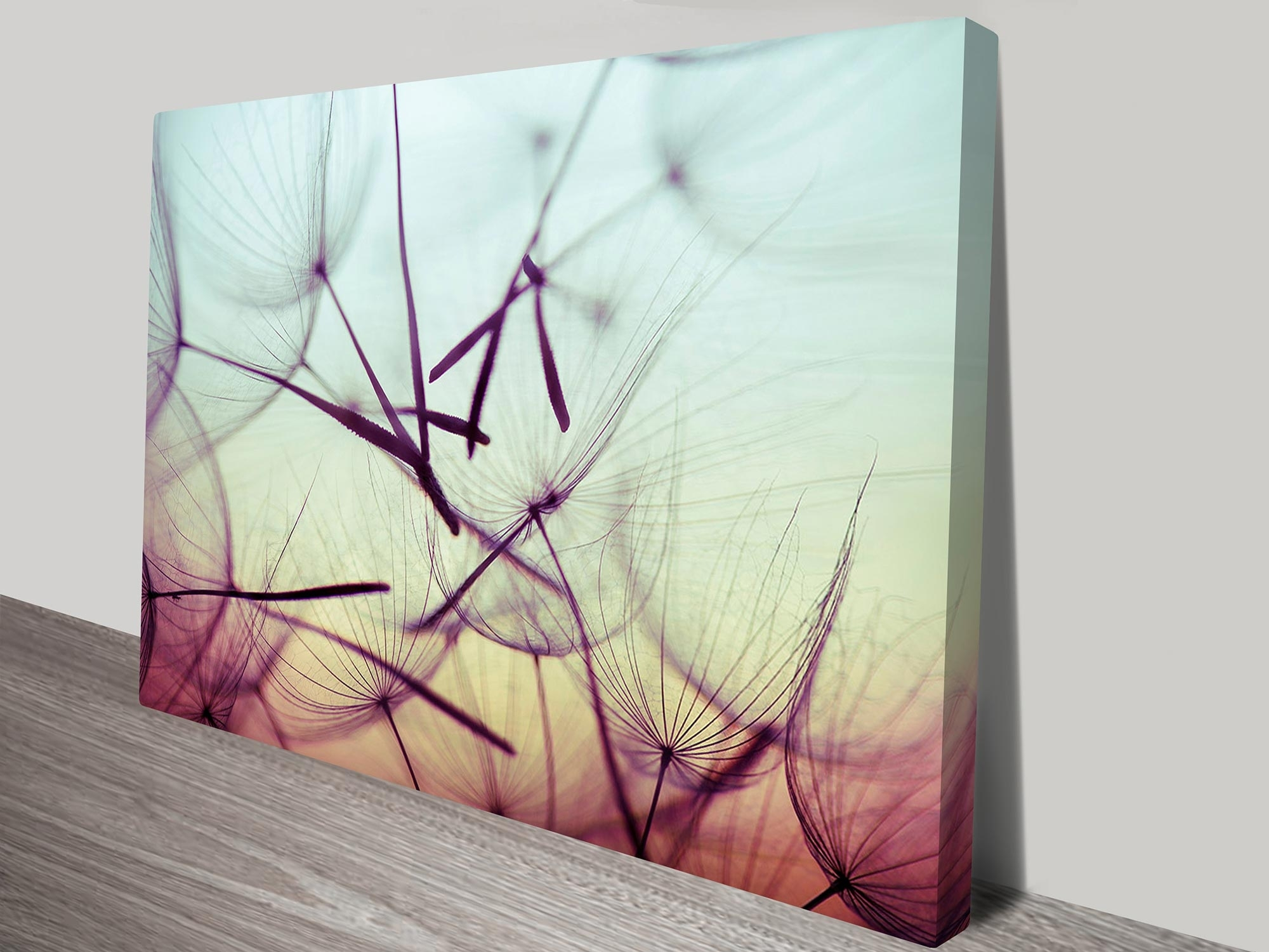 Seeds Floral Art On Canvas Print Australia Intended For Latest Dandelion Canvas Wall Art (View 11 of 15)