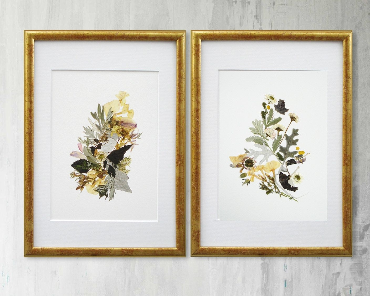 Set Of 2 Framed Botanical Prints Plant Art Contemporary Art Dry With Regard To Most Recently Released Flowers Framed Art Prints (View 11 of 15)