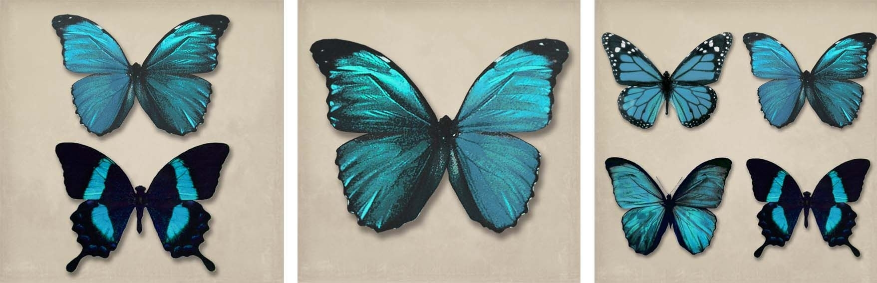 Teal Butterflies Set Of 3 Canvasesarthouse : Wallpaper Direct Throughout Most Up To Date Butterflies Canvas Wall Art (Gallery 5 of 15)