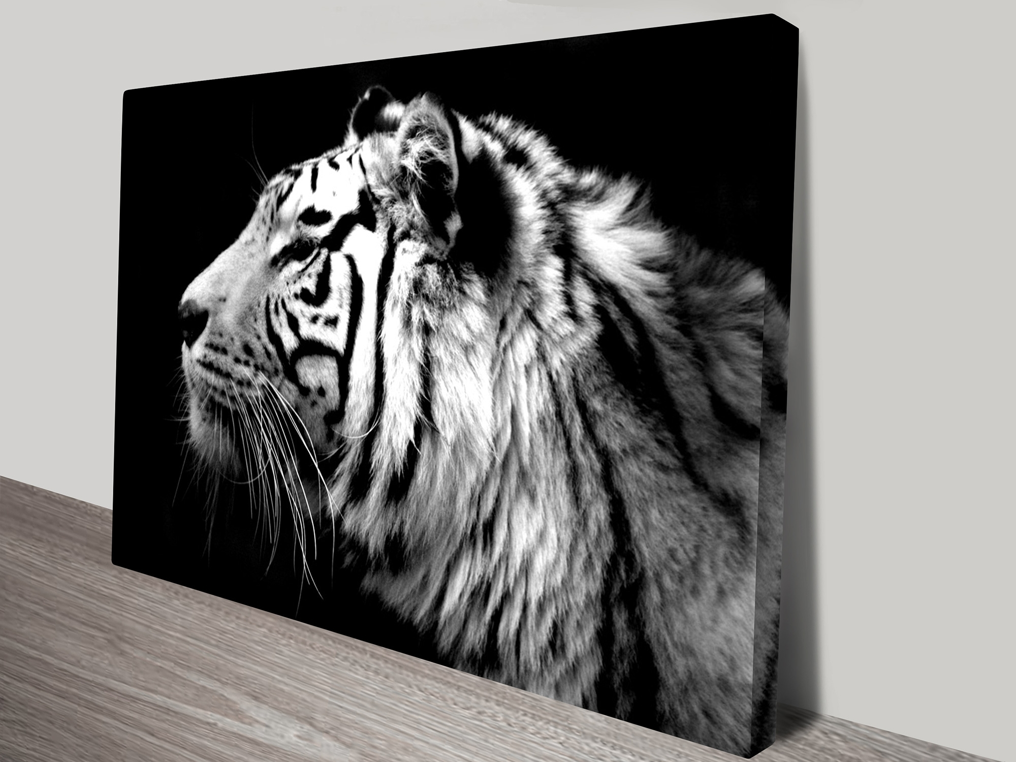 Tiger Black & White Photo Canvas Print Darwin Au Regarding Most Popular Black And White Photography Canvas Wall Art (View 14 of 15)