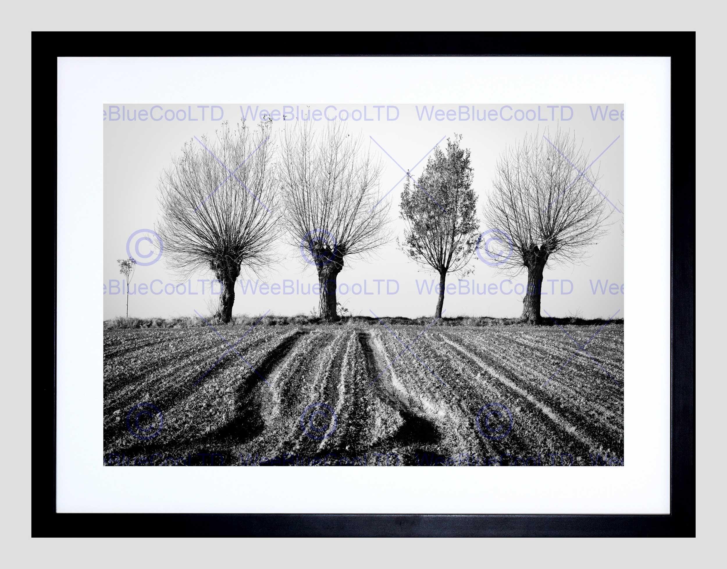 Trees Horizon Black White Black Frame Framed Art Print Picture For Recent Black And White Framed Art Prints (View 15 of 15)