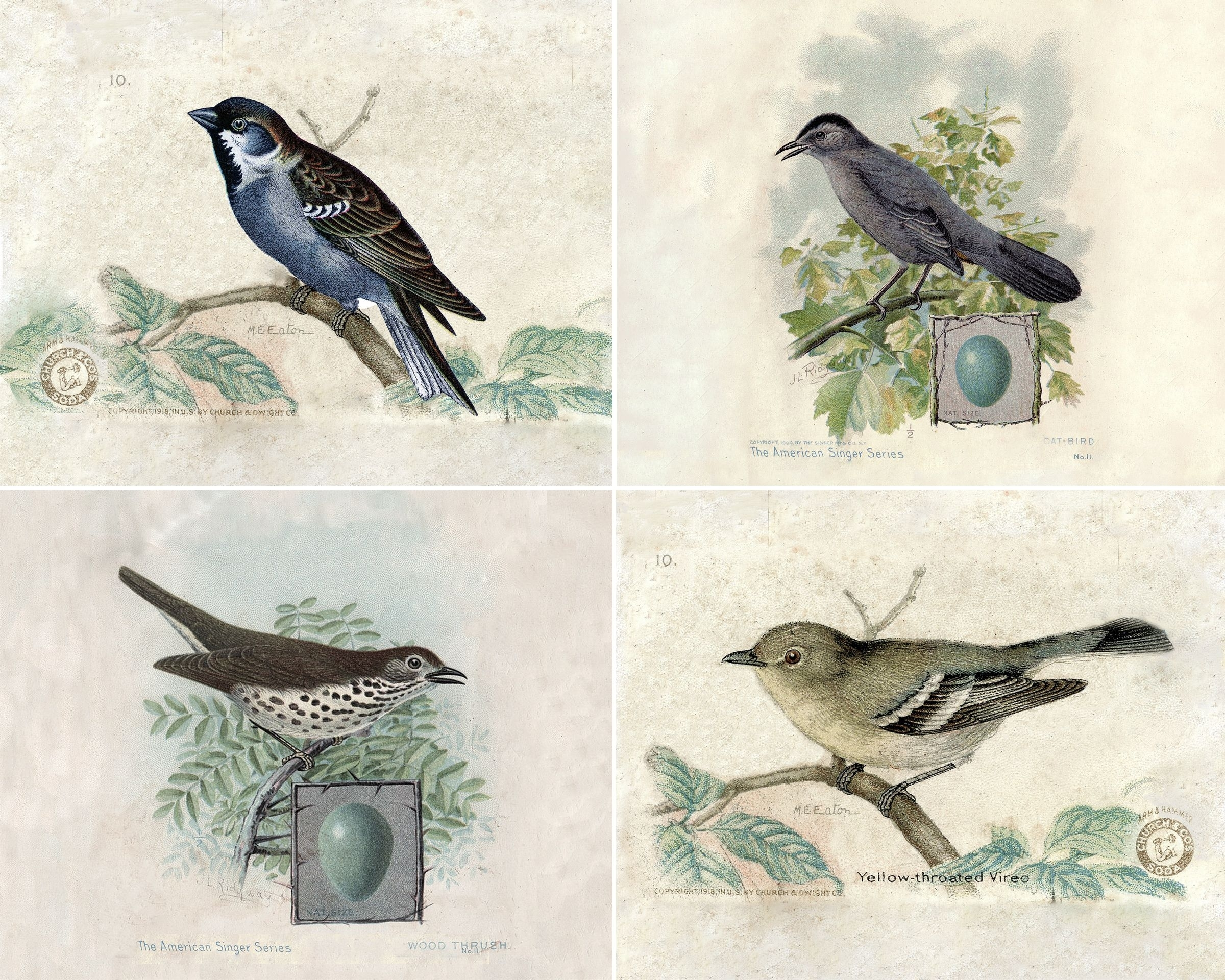 Vintage Bird Prints | Bird Prints, Prints And Bird Inside 2017 Birds Framed Art Prints (View 13 of 15)