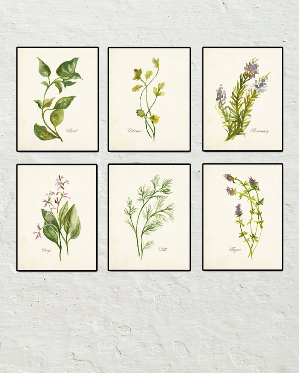 Watercolor Herbs Set No. 2 – Botanical Print Set – Printed On For Most Current Framed Botanical Art Prints (Gallery 8 of 15)