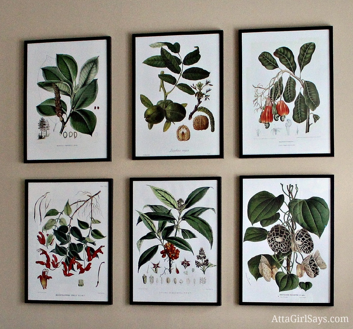 Where To Find Inexpensive Antique Botanical Prints Within Latest Framed Botanical Art Prints (View 6 of 15)