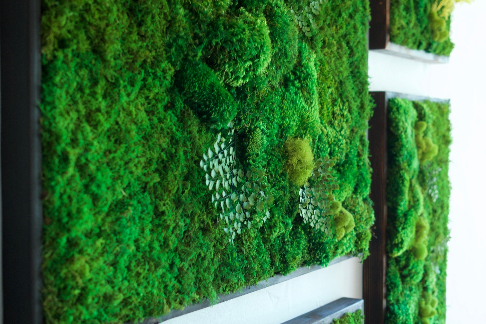 "58X58"" Real Preserved Moss Wall Art Green Wall Collage No Sticks (View 1 of 20)"