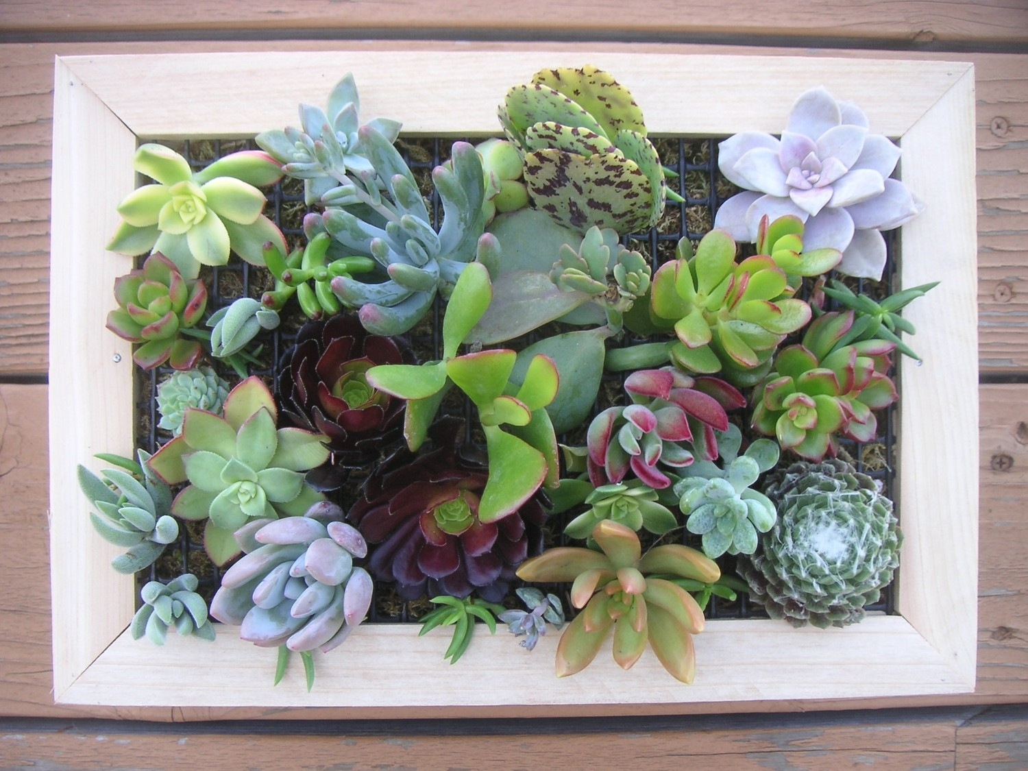 97 Living Wall Art Succulents An Old Picture Frame In Living Wall Within Most Current Succulent Wall Art (View 2 of 20)