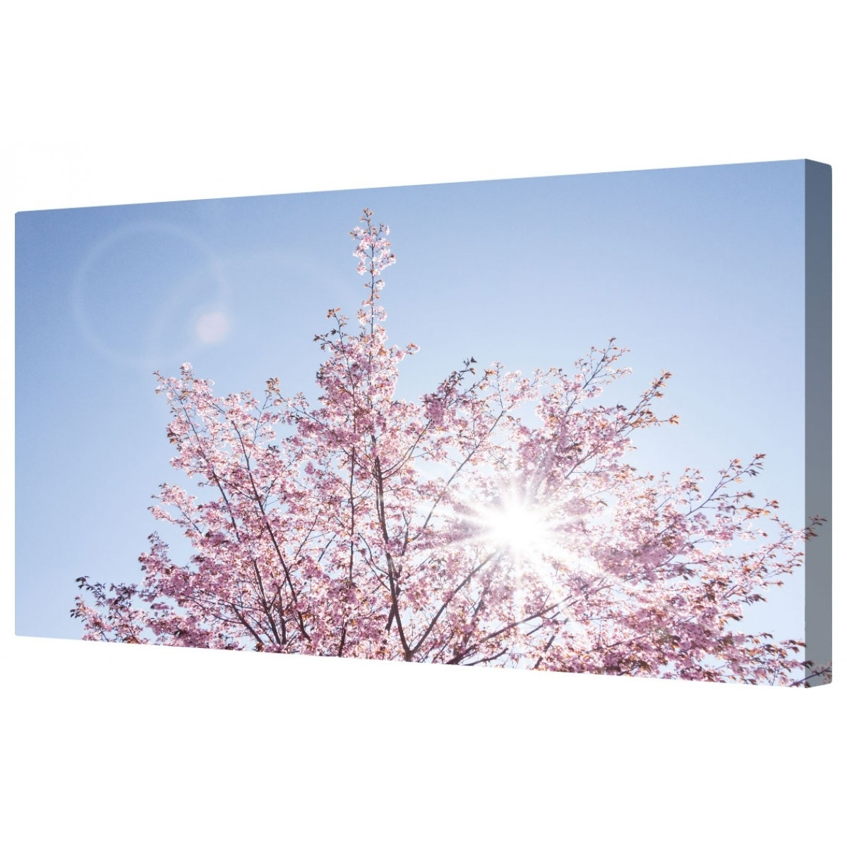 Canvart | Sunlit Cherry Blossom Framed Canvas Wall Art Picture Intended For Current Cherry Blossom Wall Art (Gallery 10 of 20)