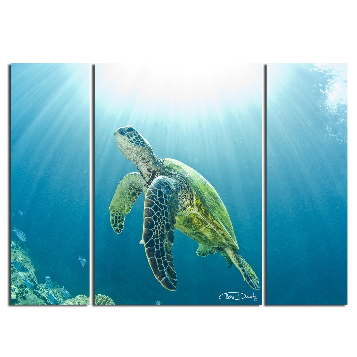 Christopher Doherty 'sea Turtle' Canvas Wall Art (3 Piece) | Ebay For Most Popular Sea Turtle Canvas Wall Art (View 7 of 20)
