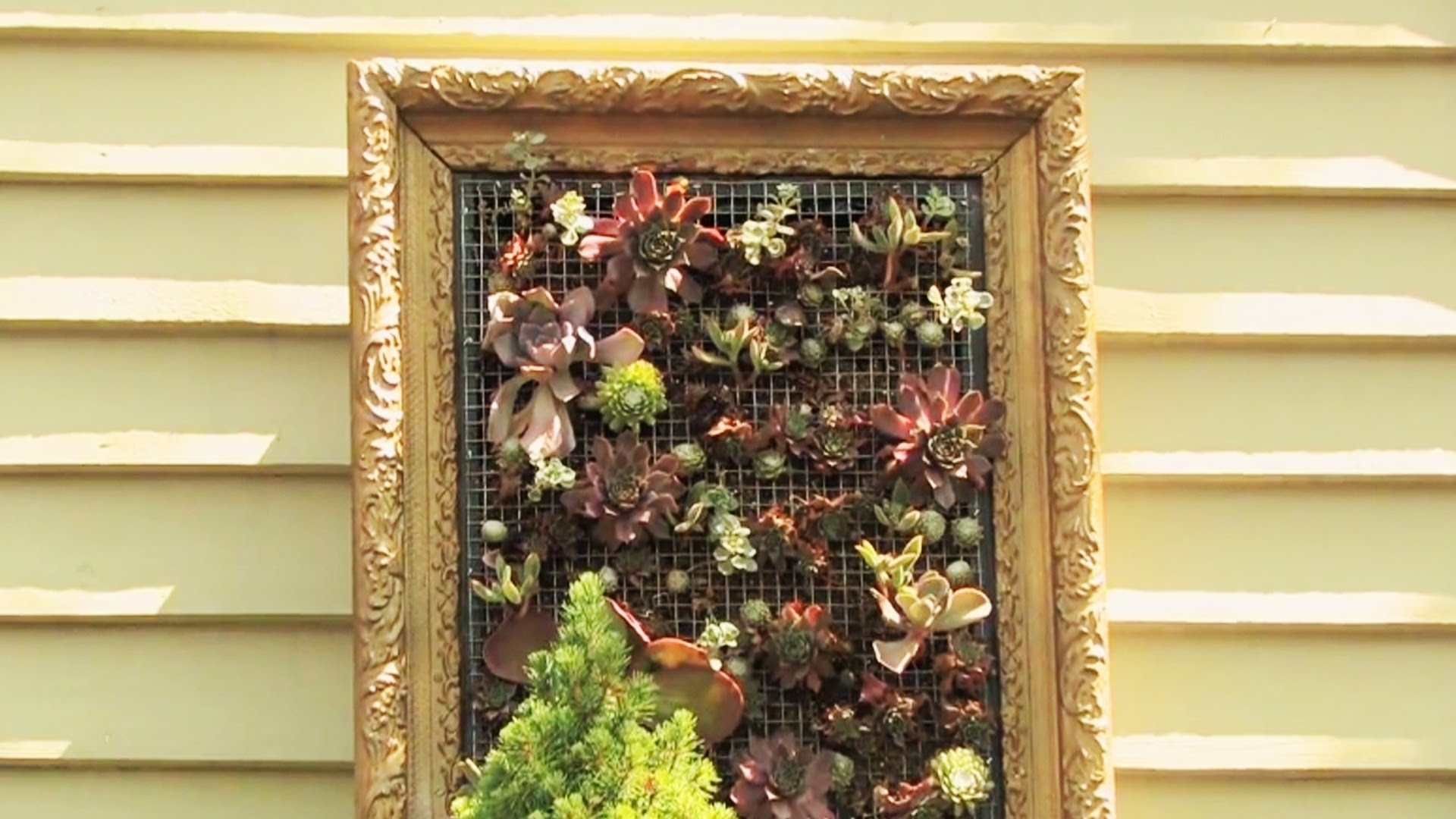 Creating Living Wall Art – Youtube Within Most Popular Living Wall Art (View 2 of 20)