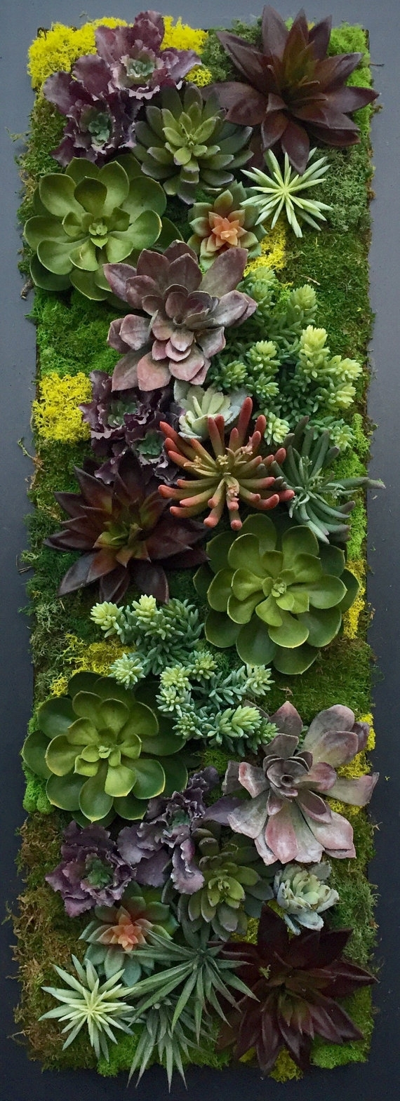 Custom Made Succulent Wall Art | ????????? | Pinterest | Succulent With Current Succulent Wall Art (Gallery 16 of 20)