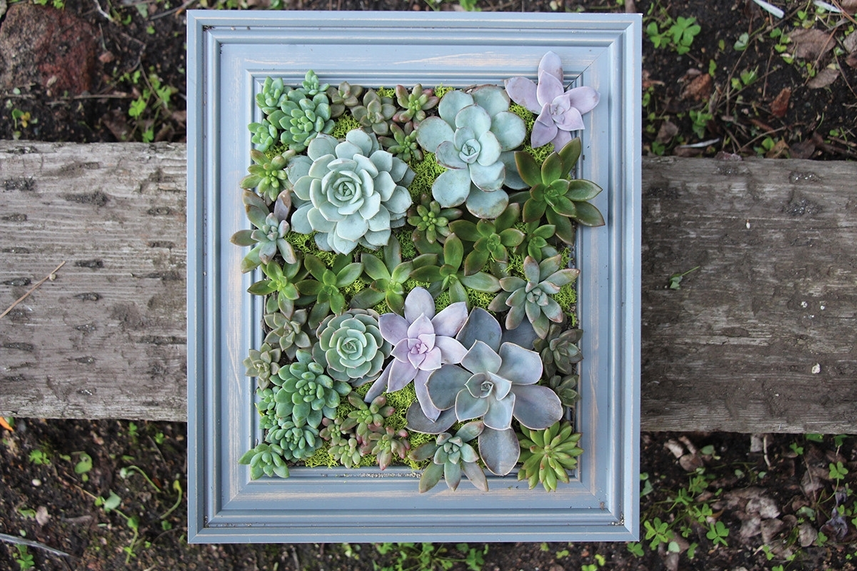 Diy A Framed Succulent Wall Planter – Do It Yourself Projects – Lonny In Recent Succulent Wall Art (View 5 of 20)