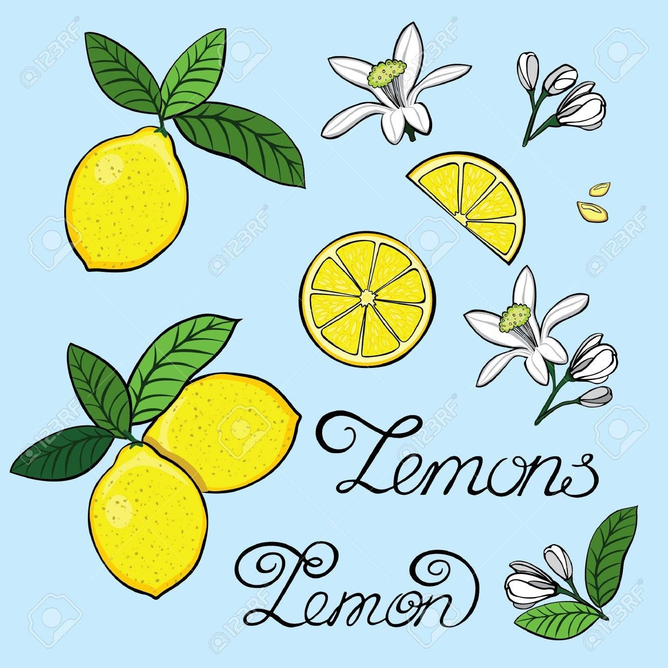 Elements For The Design Of A Lemon, Lemon Tree Flowers, Grain With Newest Lemon Wall Art (View 4 of 20)