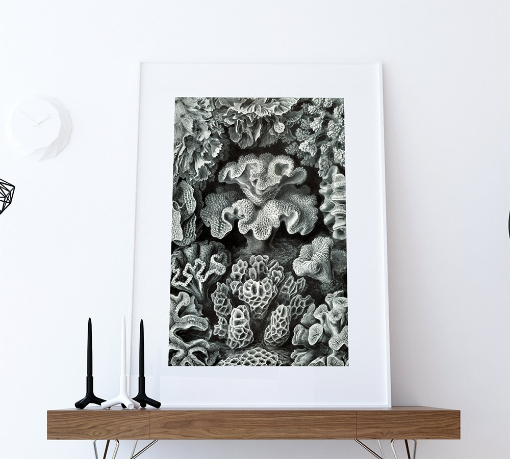 Ernst Haeckel Hexacoralla Print Sea Coral Art Vintage Nautical Decor Throughout Most Recently Released Coral Wall Art (View 7 of 20)