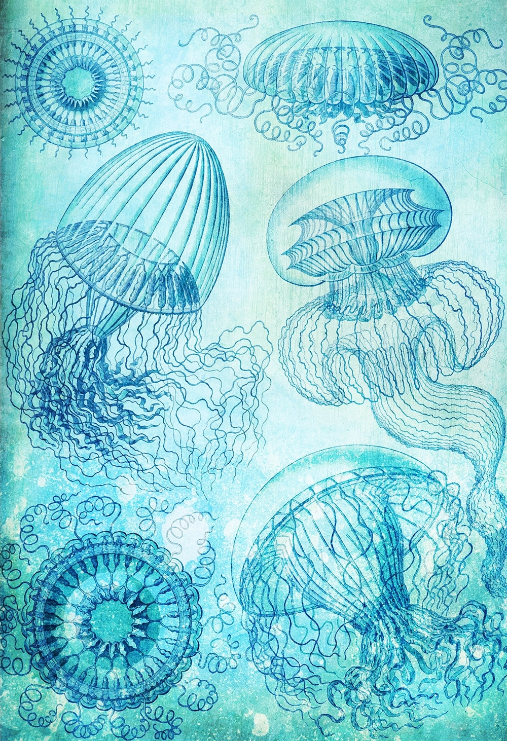 Ernst Haeckel Leptomedusae Print Jelly Fish Art Vintage Nautical Inside Most Popular Ocean Wall Art (View 11 of 20)