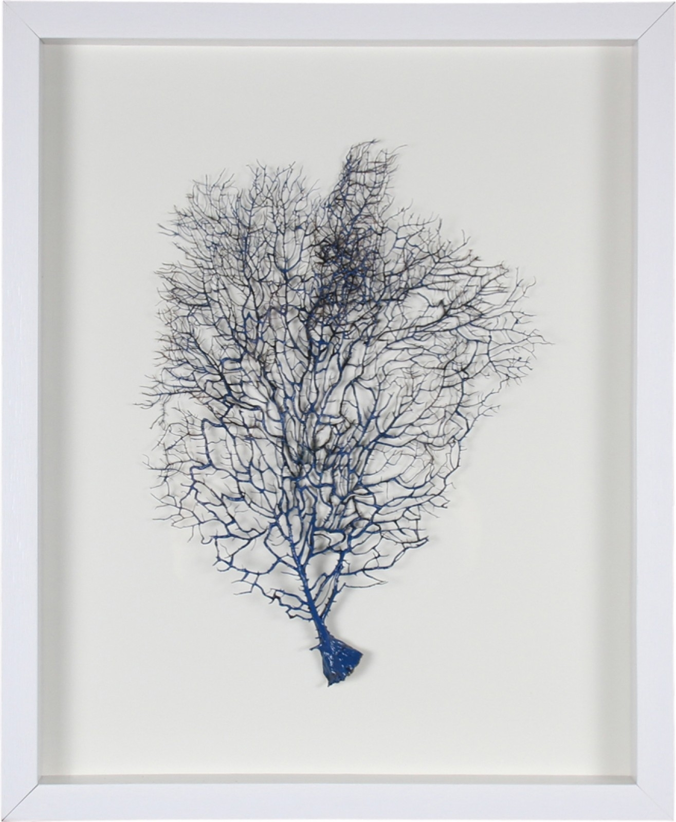 Framed Coral Wall Art Navy | Wholesale Homewares And Giftware Throughout Best And Newest Coral Wall Art (Gallery 15 of 20)
