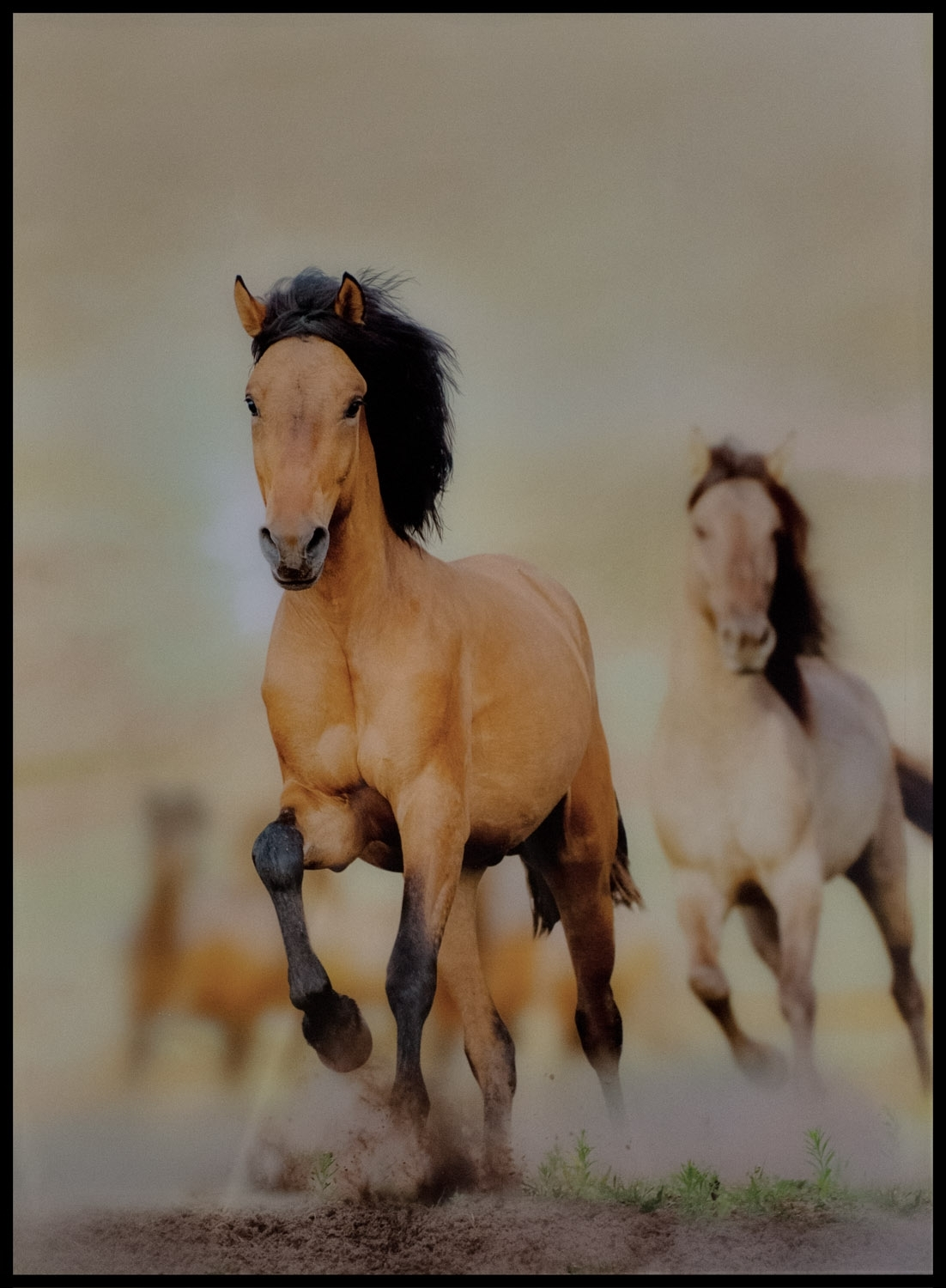 Galloping Horses Wall Art – Casanad Pertaining To Most Recently Released Horses Wall Art (View 17 of 20)