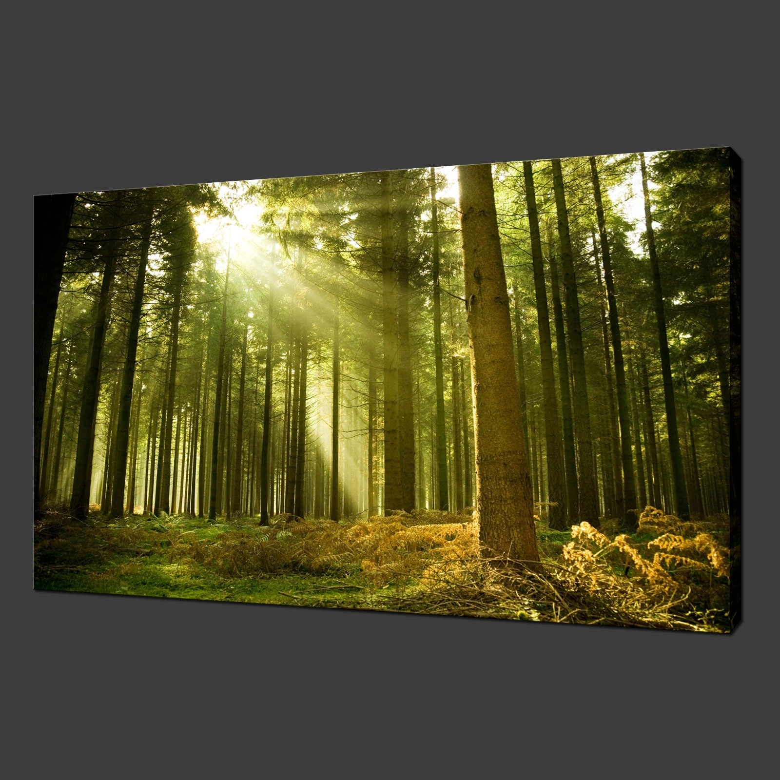 Green Forest Rays Premium Canvas Print Wall Art Modern Design Free For Latest Green Wall Art (View 8 of 20)