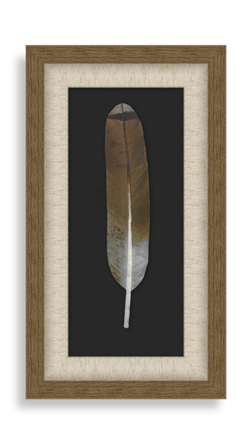 Harris Feather Wall Art | Gabberts In Latest Feather Wall Art (Gallery 19 of 20)