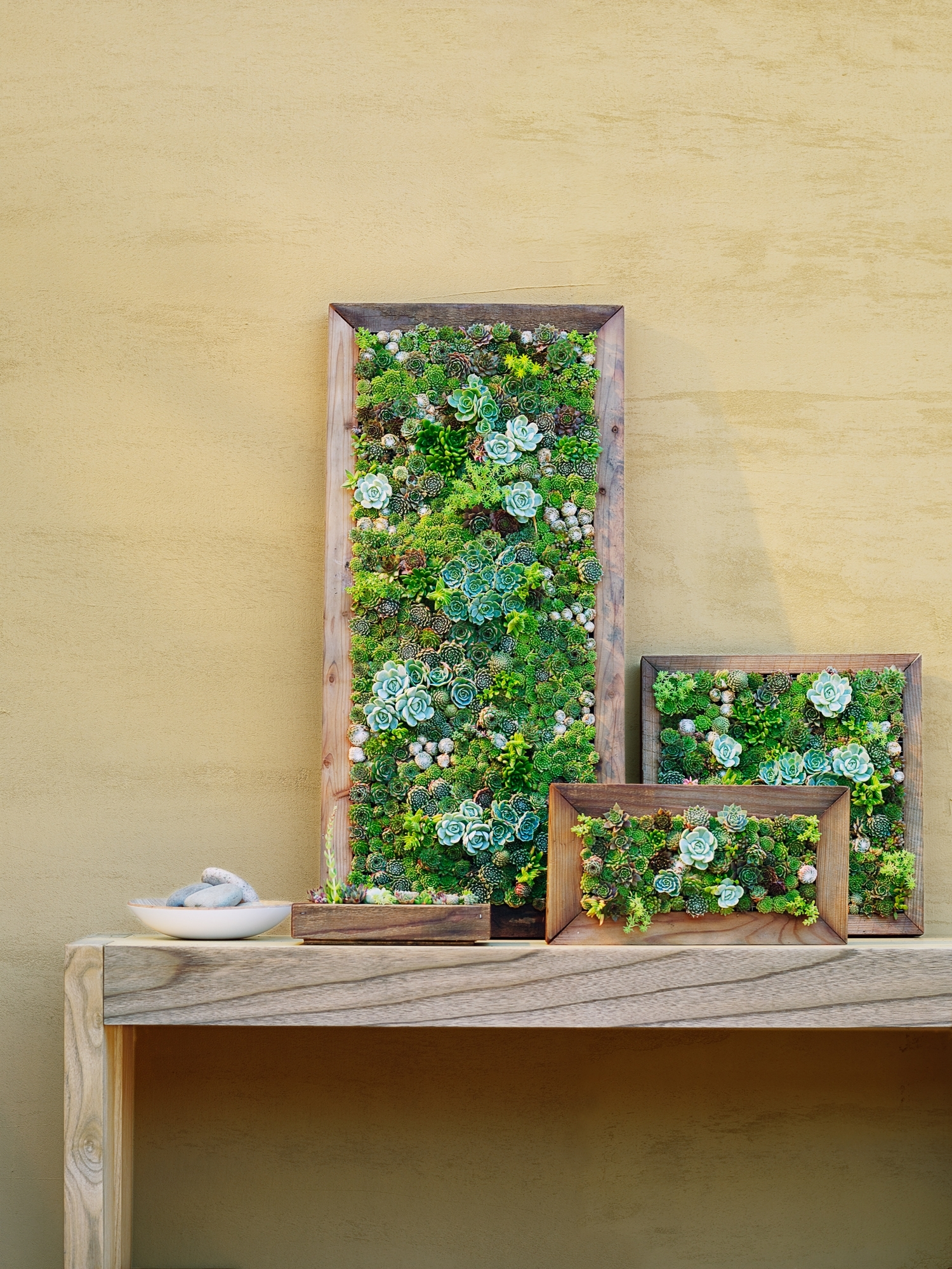 How To Make Vertical Succulent Gardens – Sunset Magazine With Regard To Best And Newest Living Wall Art (View 4 of 20)