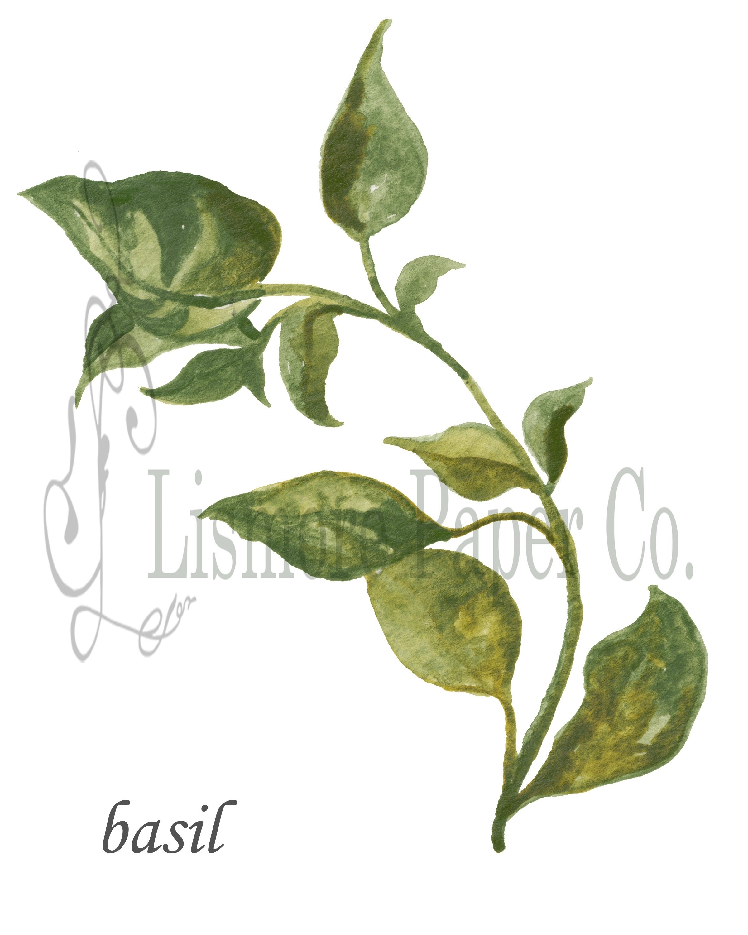 Instant Download Botanical, Basil Herb, Printable Art, Instant Wall Within 2018 Herb Wall Art (Gallery 20 of 20)