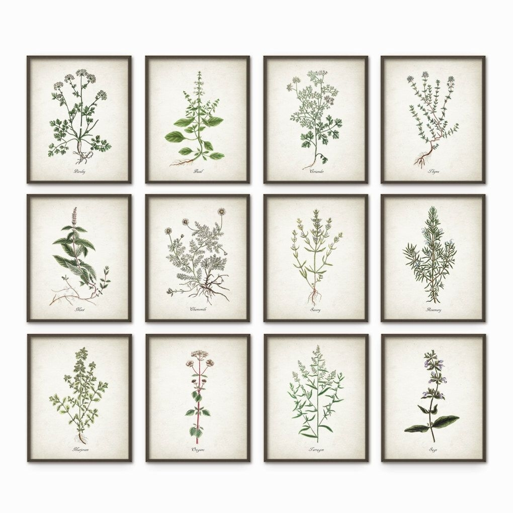 Kitchen Herbs Wall Art Print Set Of 12 - Vintage Botanical Herb pertaining to Newest Herb Wall Art