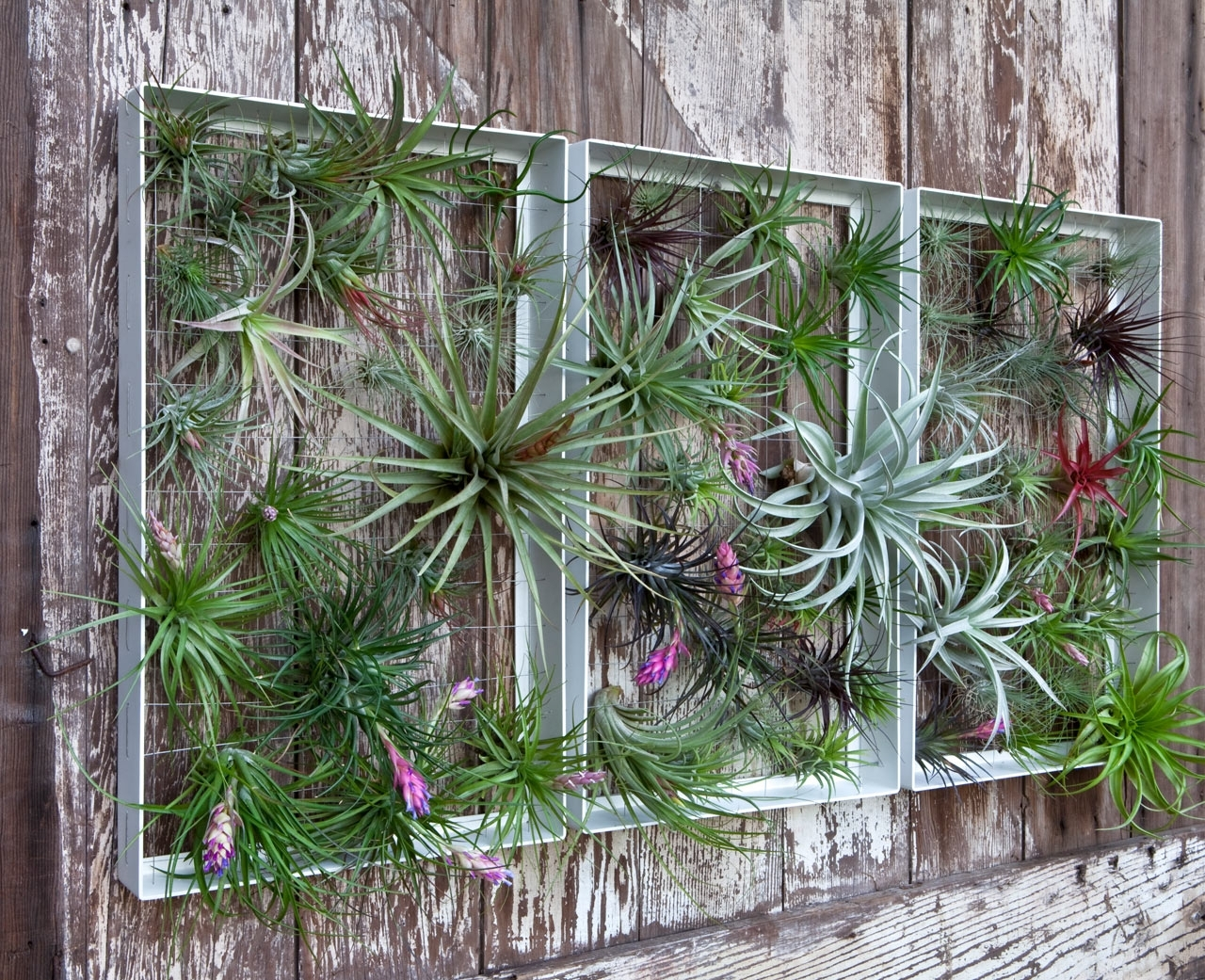 Living Wall Art Vertical Garden Framesairplantman – Design Milk With Regard To 2017 Living Wall Art (View 7 of 20)