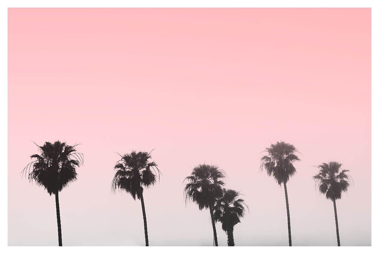 Minimalist Palm Tree Print | Poster Print | Capricorn Press Within Latest Pink Wall Art (View 7 of 20)