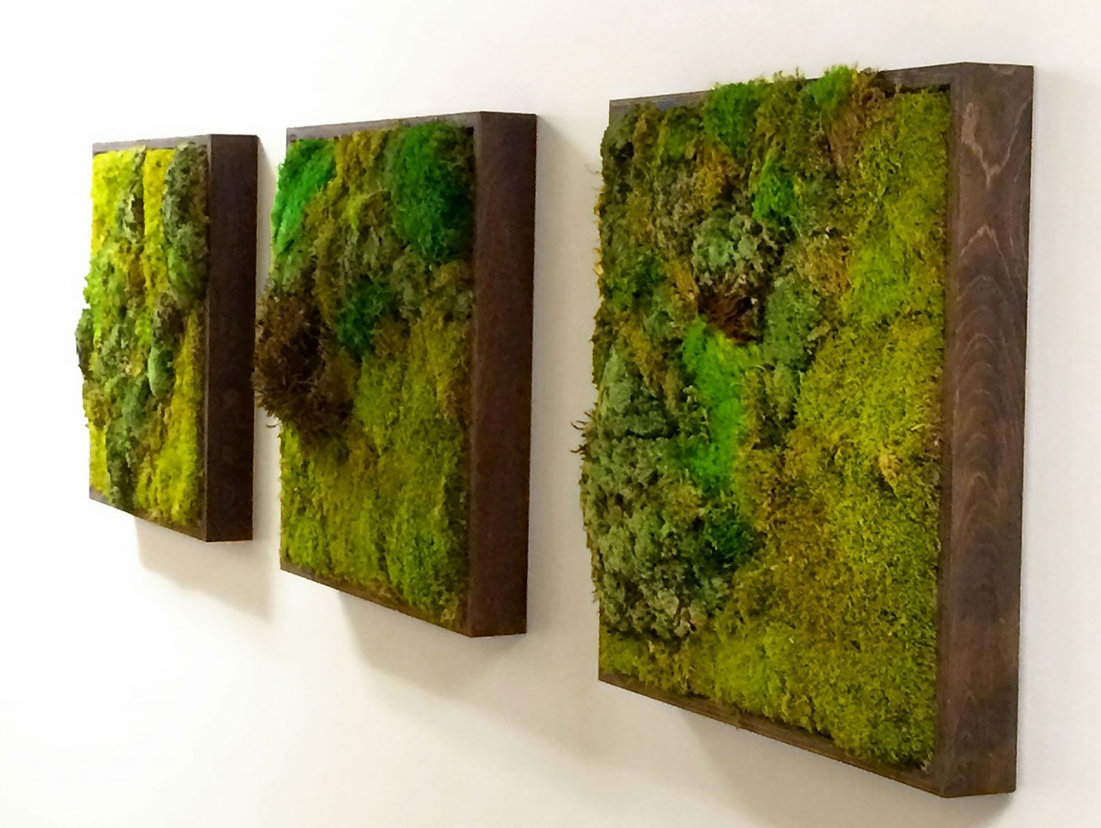 Moss Walls: The Newest Trend In Biophilic Interiors | Art 3 X For Best And Newest Moss Wall Art (View 3 of 20)