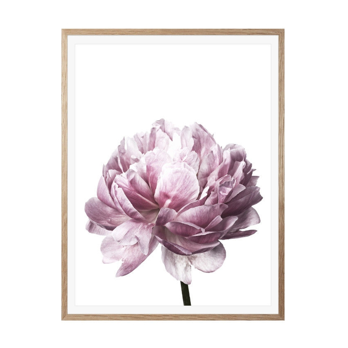 Peony Flower Wall Art Canvas Painting Picture Home Decor Mural Frame With 2018 Flower Wall Art (View 17 of 20)