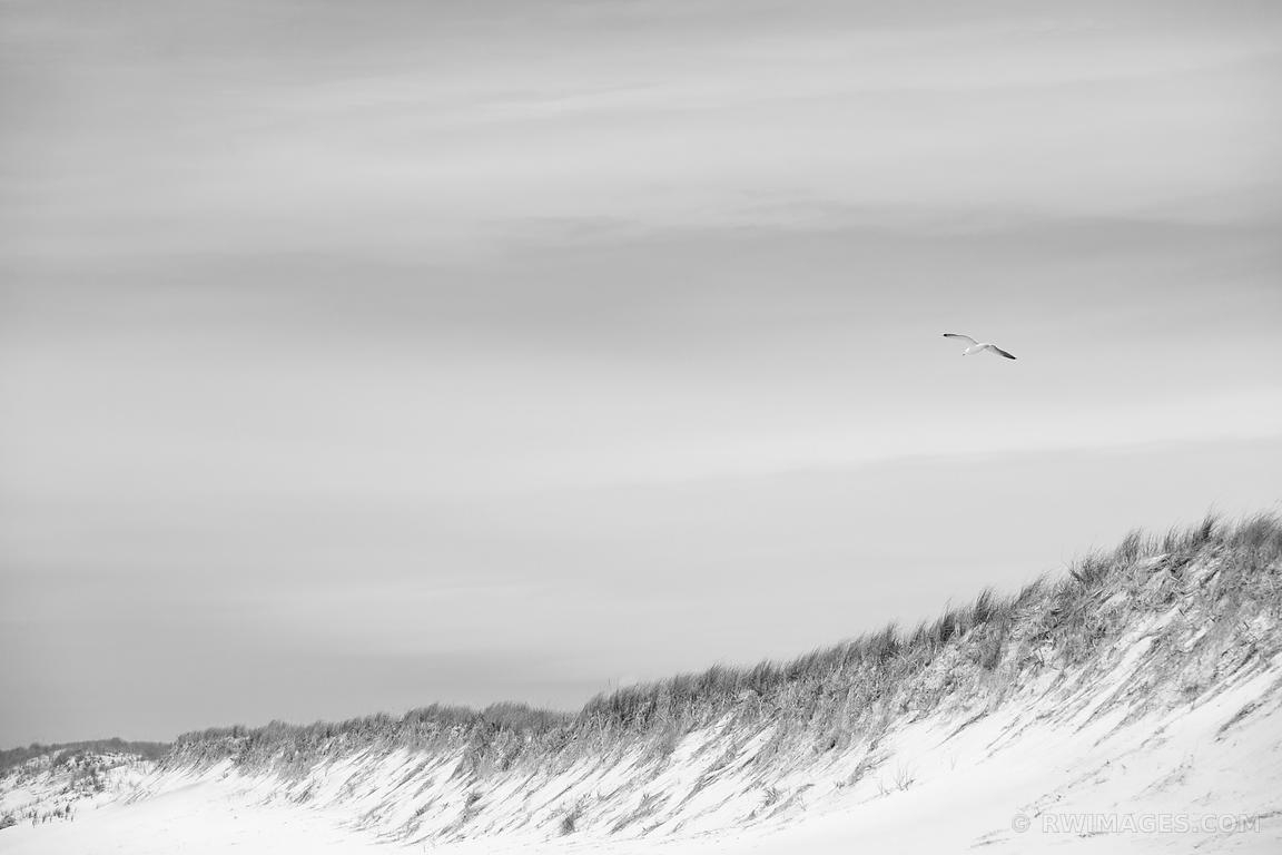 Photo Print Of Southampton Long Island Beach Dunes Seagull Black And within Most Up-to-Date Long Island Wall Art