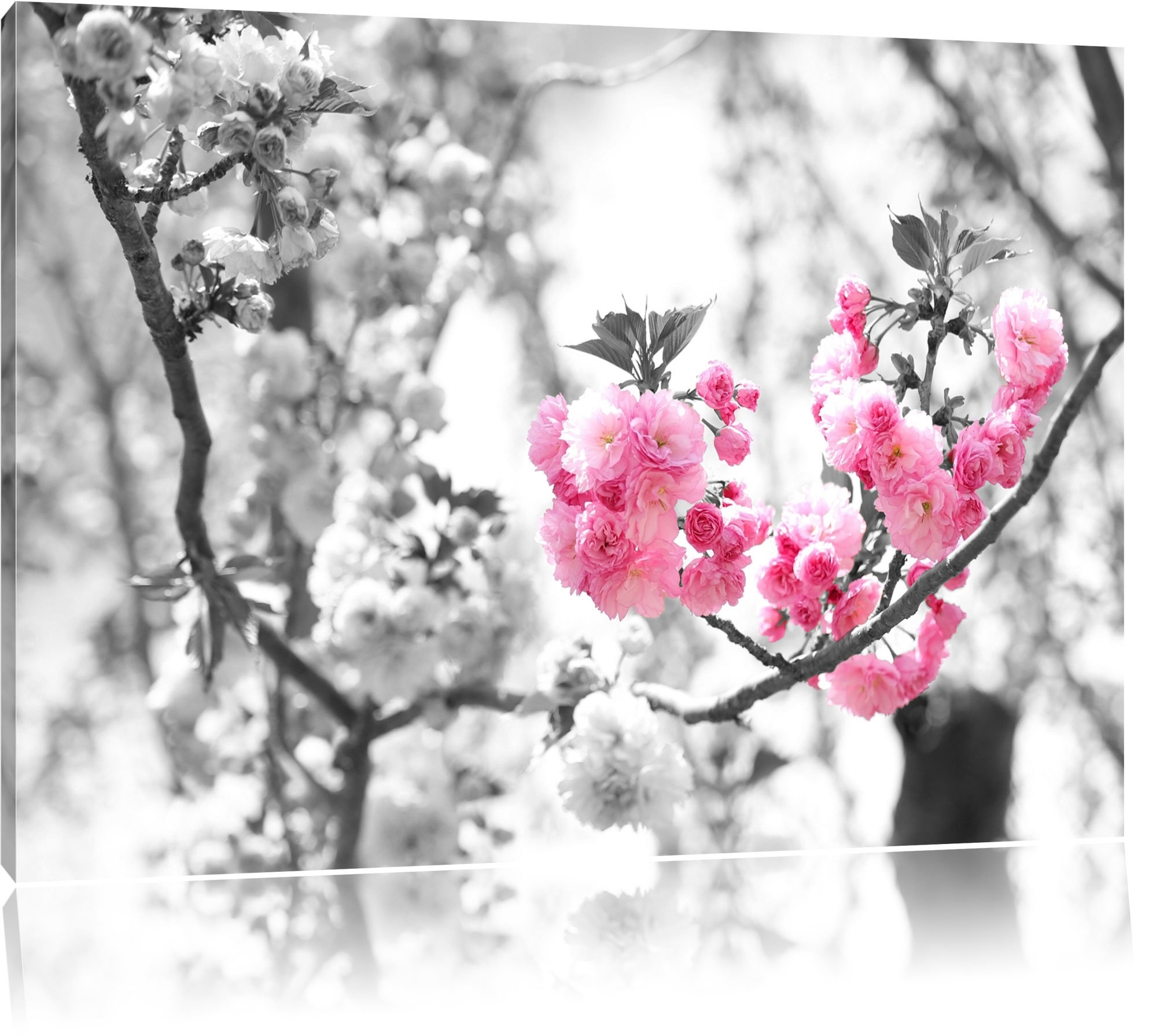 Pixxprint Beautiful Cherry Blossom Wall Art On Canvas | Wayfair.co (View 16 of 20)