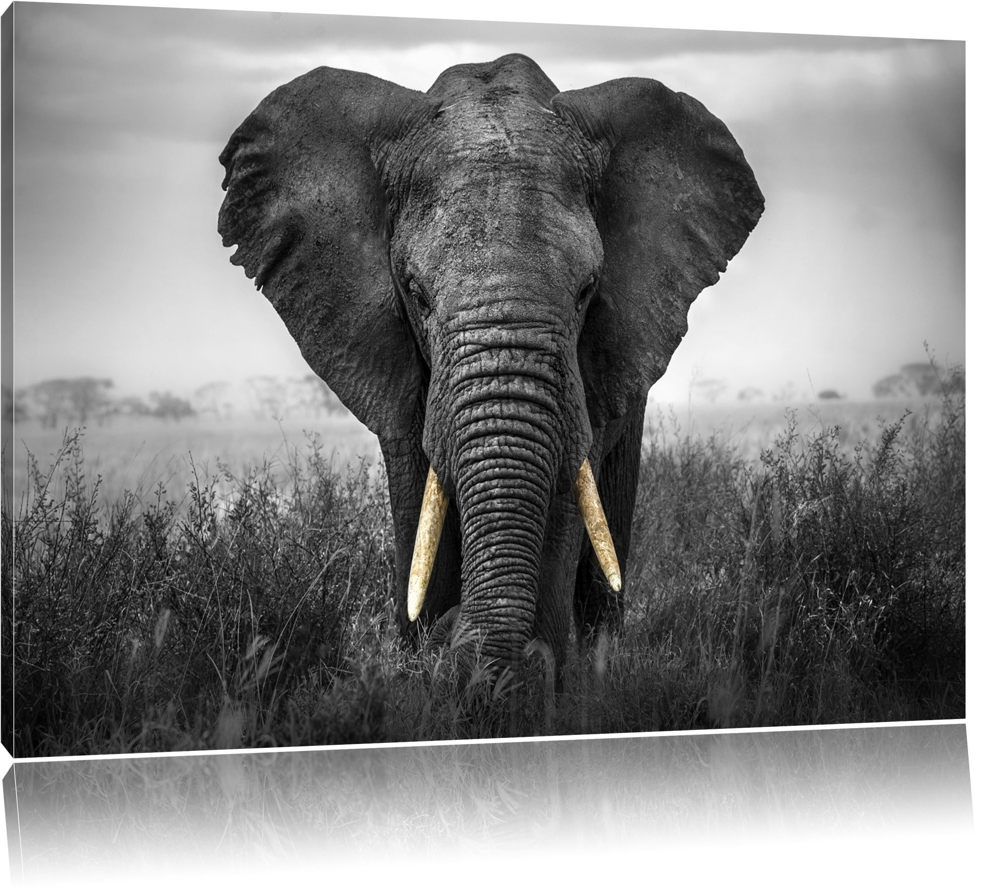 Pixxprint Graceful Elephant Wall Art On Canvas | Wayfair.co (View 14 of 15)