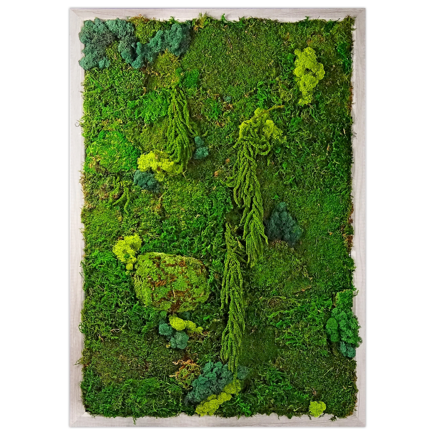 Preserved Moss Wall Garden | Luludi Living Art | Kaufmann Mercantile Pertaining To Most Up To Date Moss Wall Art (View 18 of 20)