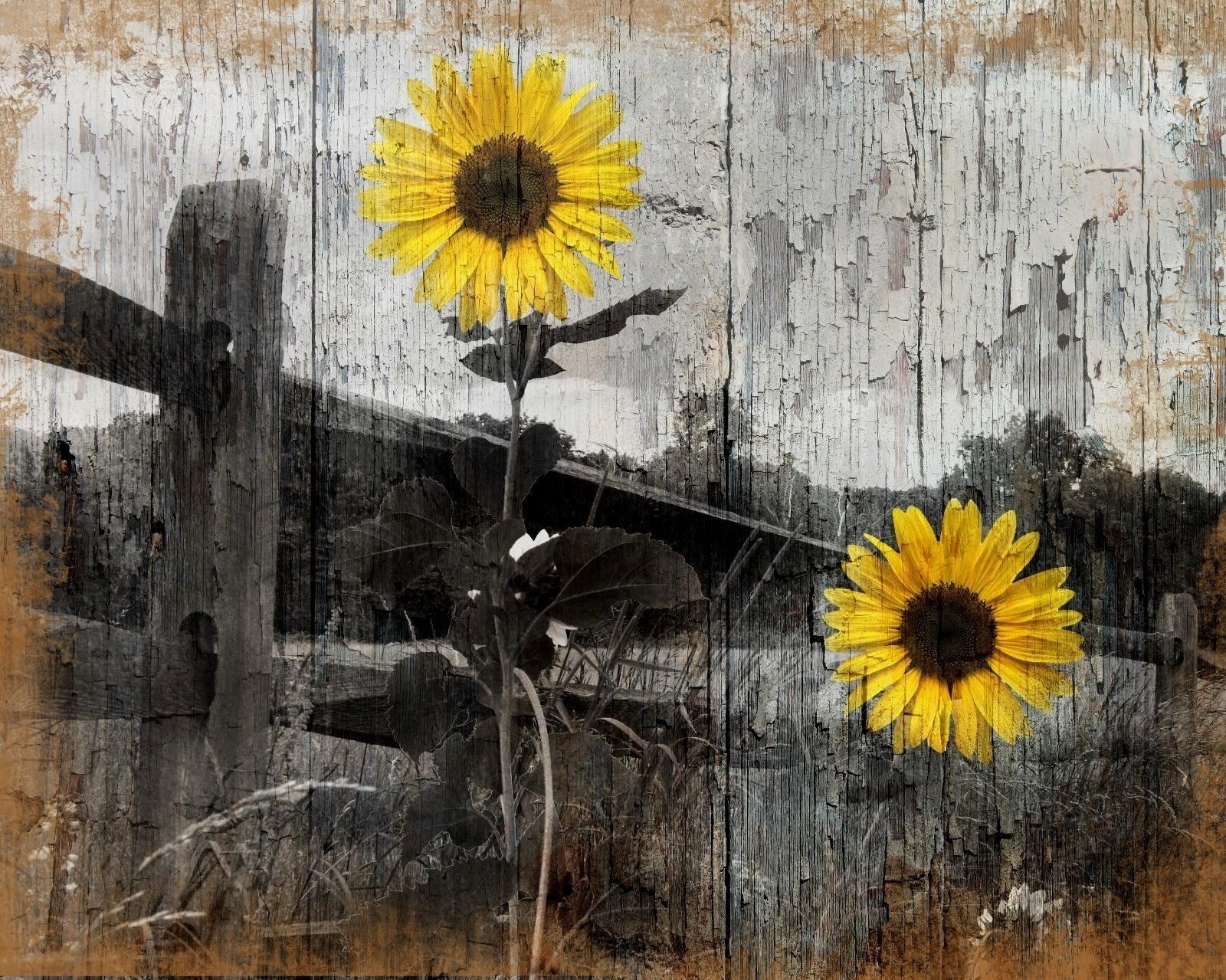Rustic Sunflower Country/farmhouse Home Wall Art Decor Matted With Regard To 2018 Sunflower Wall Art (View 9 of 20)