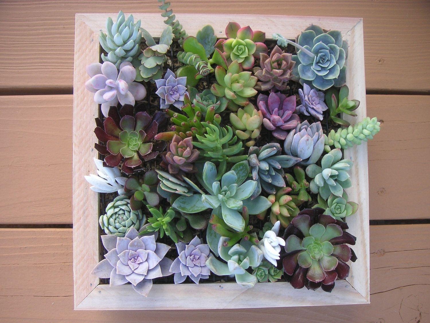 Succulent Framed Wall Art – Elitflat Within Most Popular Succulent Wall Art (View 3 of 20)