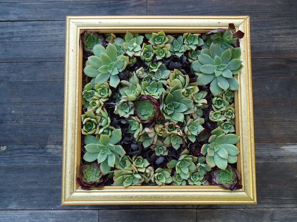 Succulent Wall Art: 9 Steps (With Pictures) For Recent Succulent Wall Art (View 1 of 20)