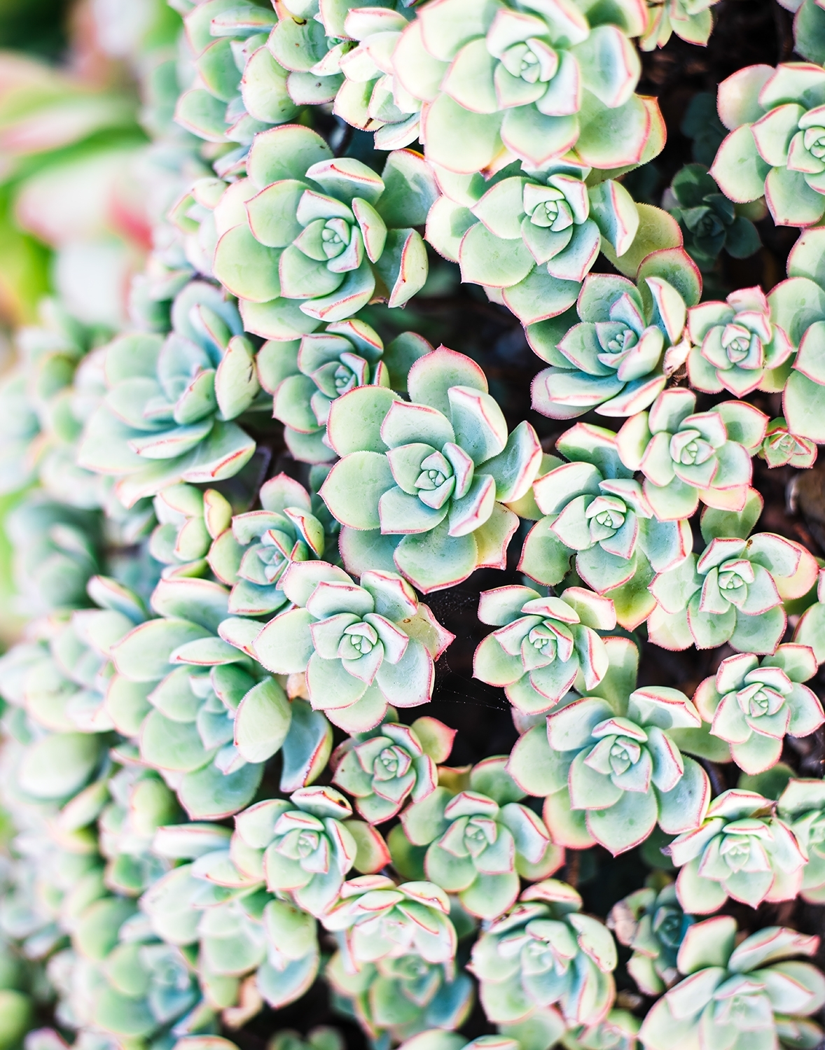 Succulent Wall Art | Home Decor Photography Print | Whitney Finuf Throughout Most Recent Succulent Wall Art (View 11 of 20)