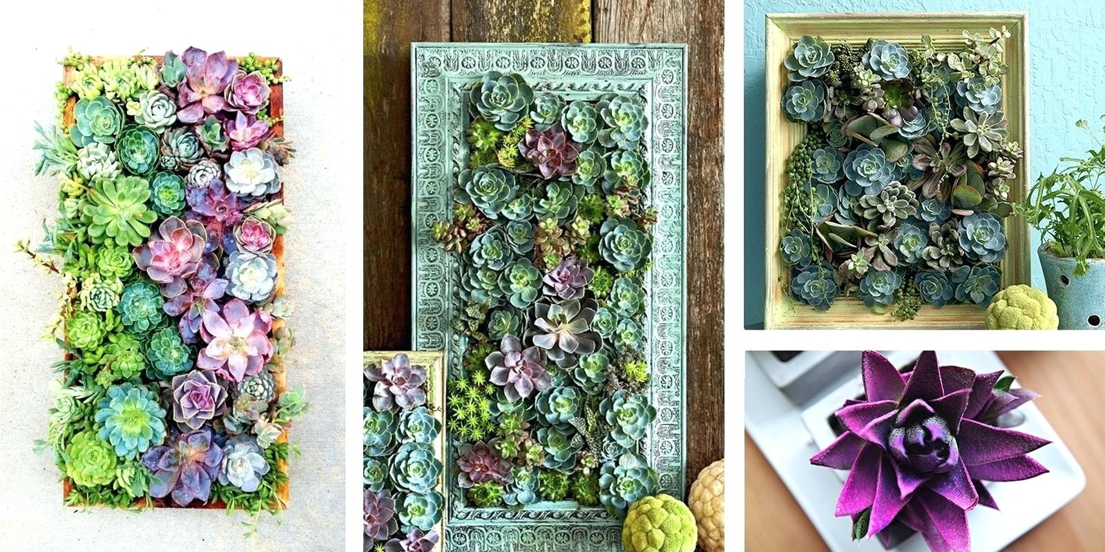 Succulent Wall Hanging Art Kit Decor Diy – Restorethelakes For Latest Succulent Wall Art (View 17 of 20)