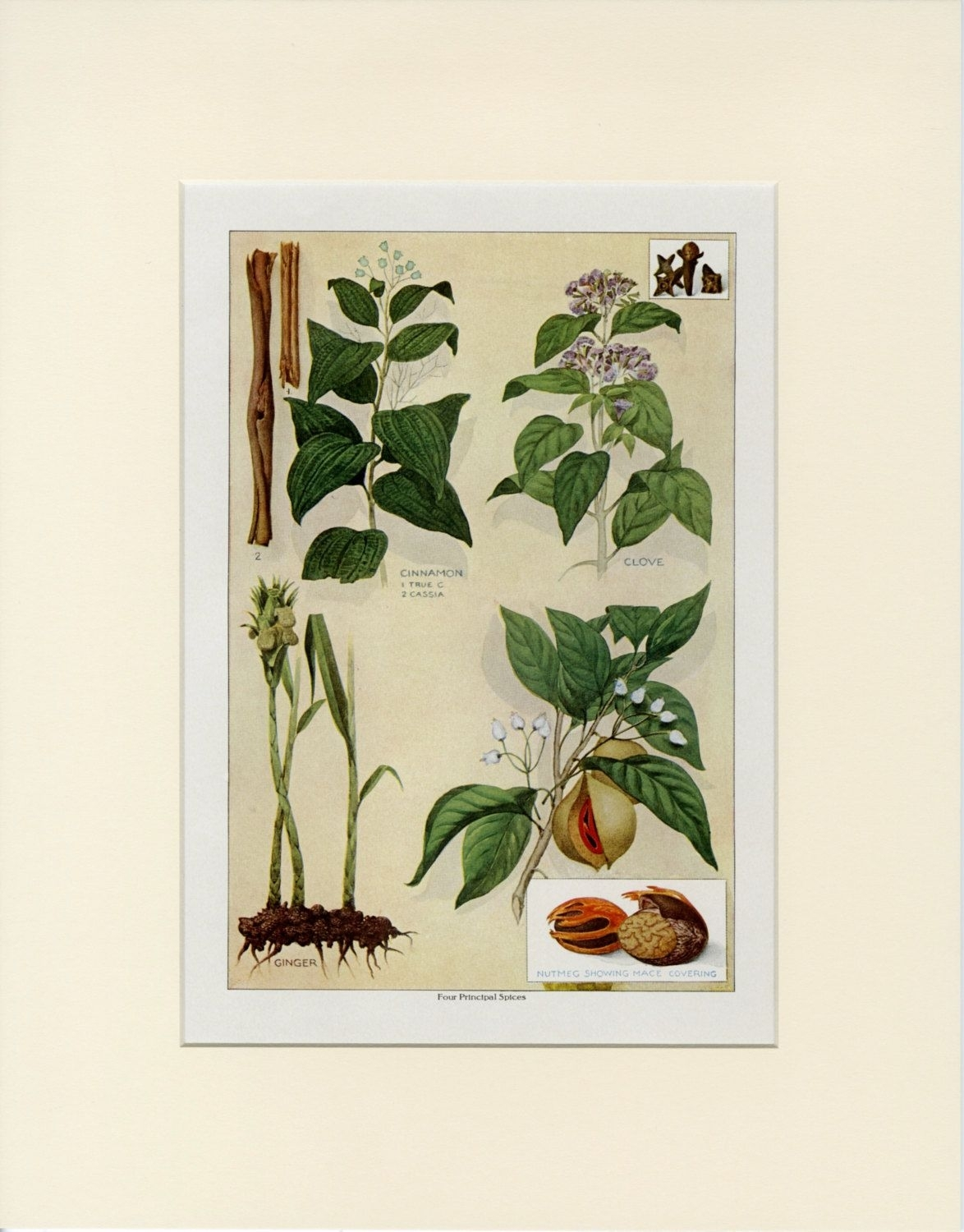 Vintage Herb Wall Art, Four Principal Spices: Cinnamon Clove Ginger with Most Current Herb Wall Art