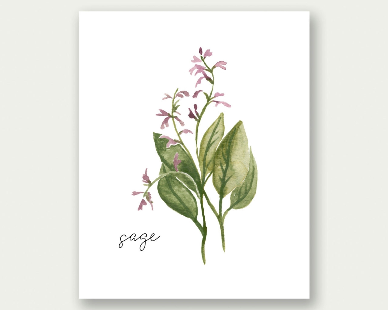 Watercolor Landcolor Skycolor — Herb Wall Art, Herb Print, Sage Wall With Regard To Latest Herb Wall Art (View 6 of 20)