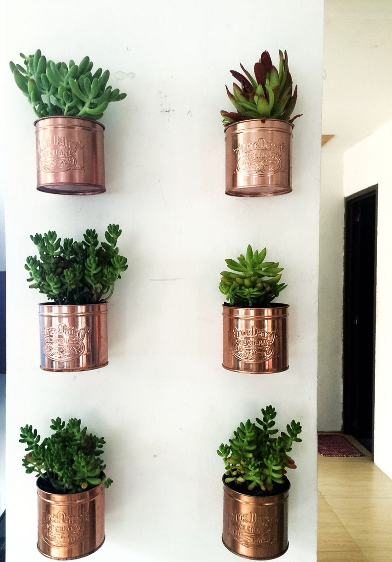 Indoor Plants /succulents With Regard To Farm Metal Wall Rack And 3 Tin Pot With Hanger Wall Decor (Gallery 18 of 20)