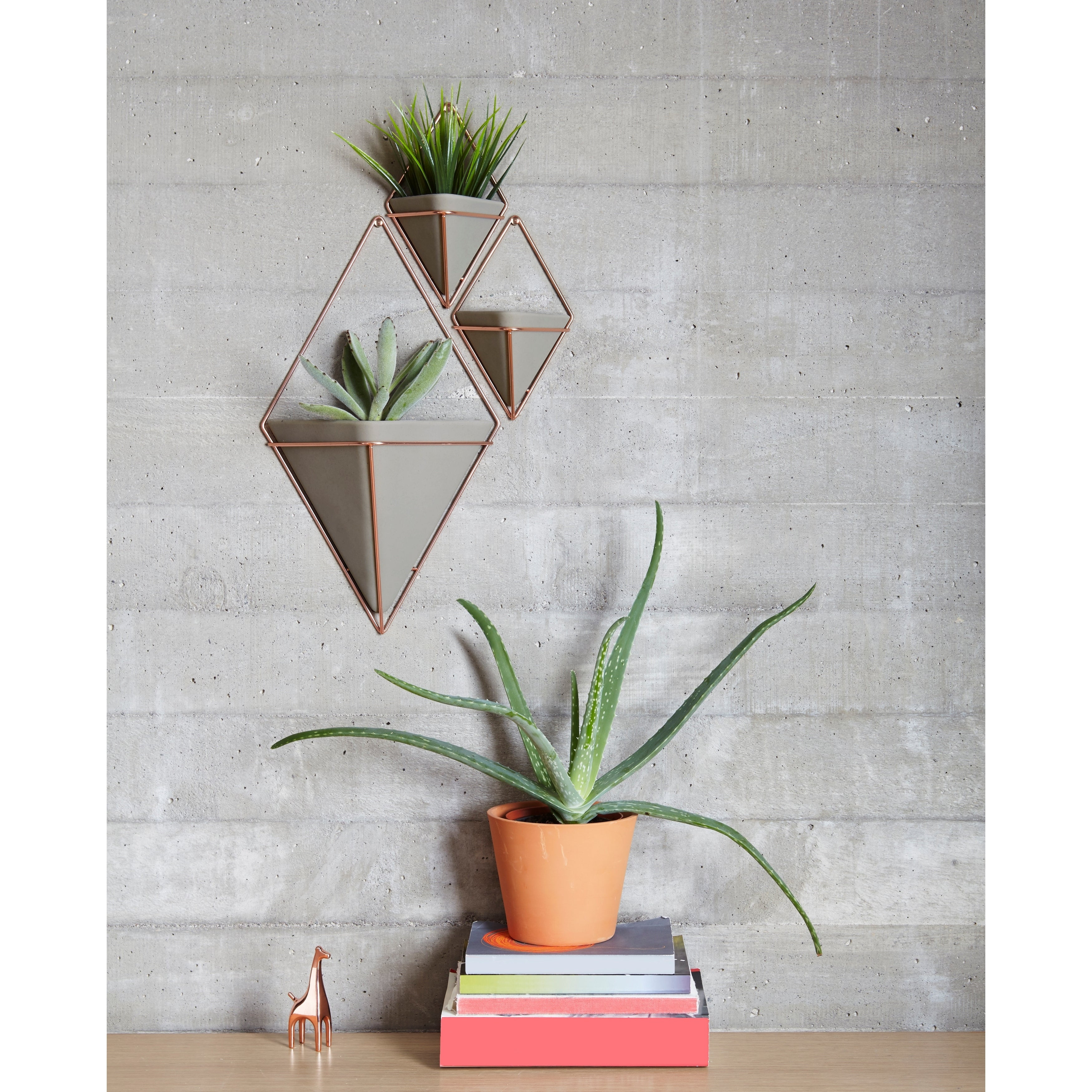 Trigg Ceramic Planter Wall Decor With Regard To Most Popular Shop Umbra Trigg Hanging Planter & Wall Decor (Set Of 2) – Free (Gallery 5 of 20)
