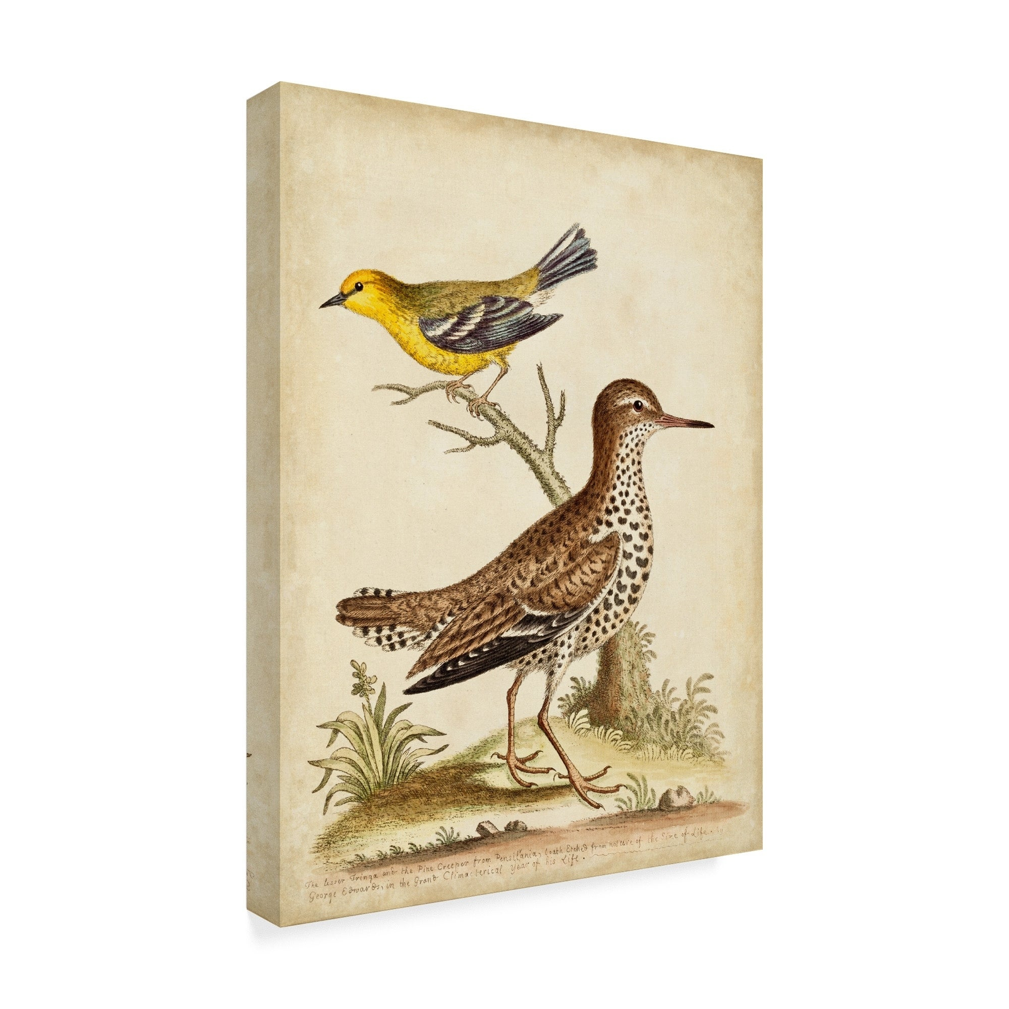 Well Known Wall Decor By World Menagerie Pertaining To Shop George Edwards 'antique Bird Menagerie I' Canvas Art – On Sale (View 17 of 20)