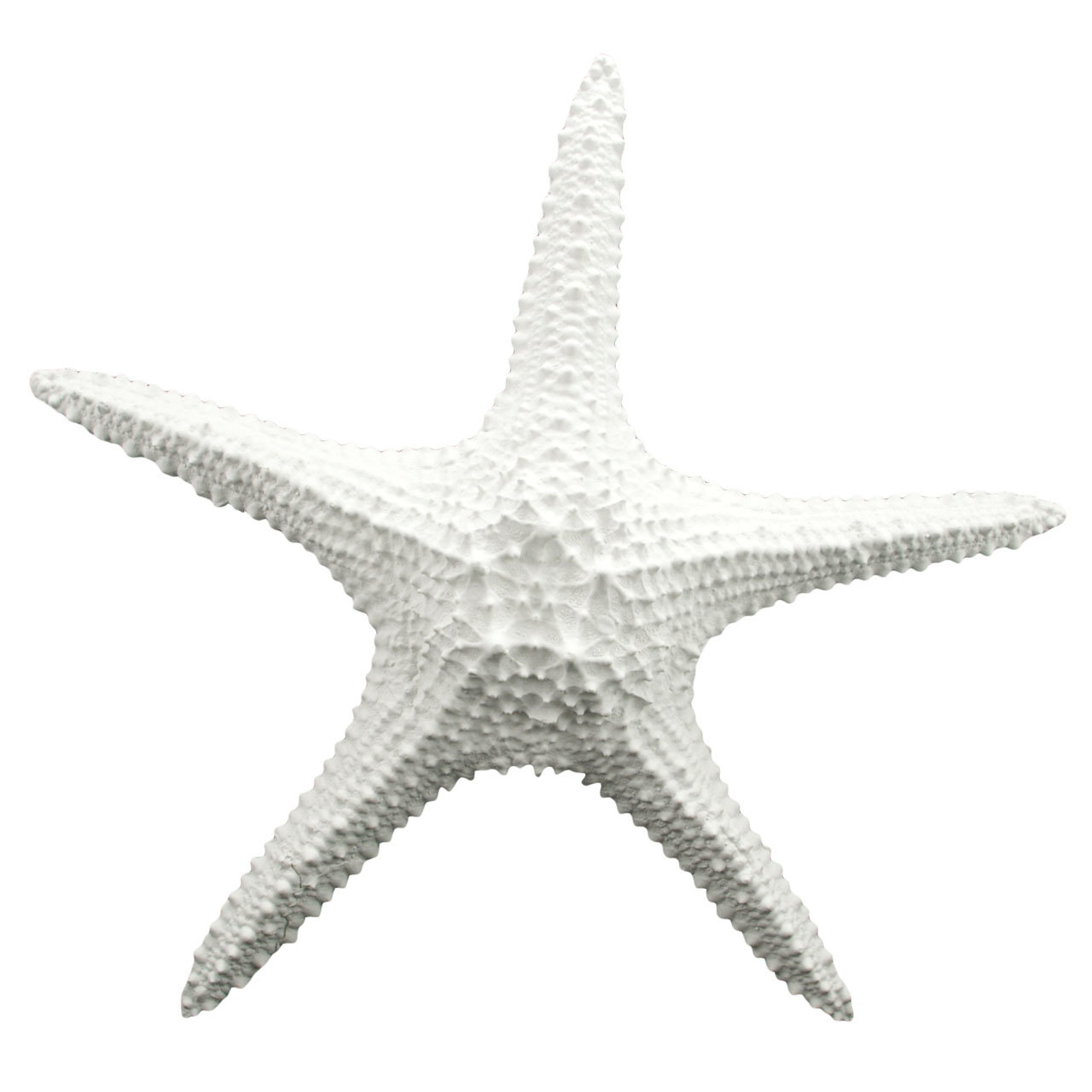 Birch Lane Regarding Latest Yelton 3 Piece Starfish Wall Decor Sets (View 6 of 20)