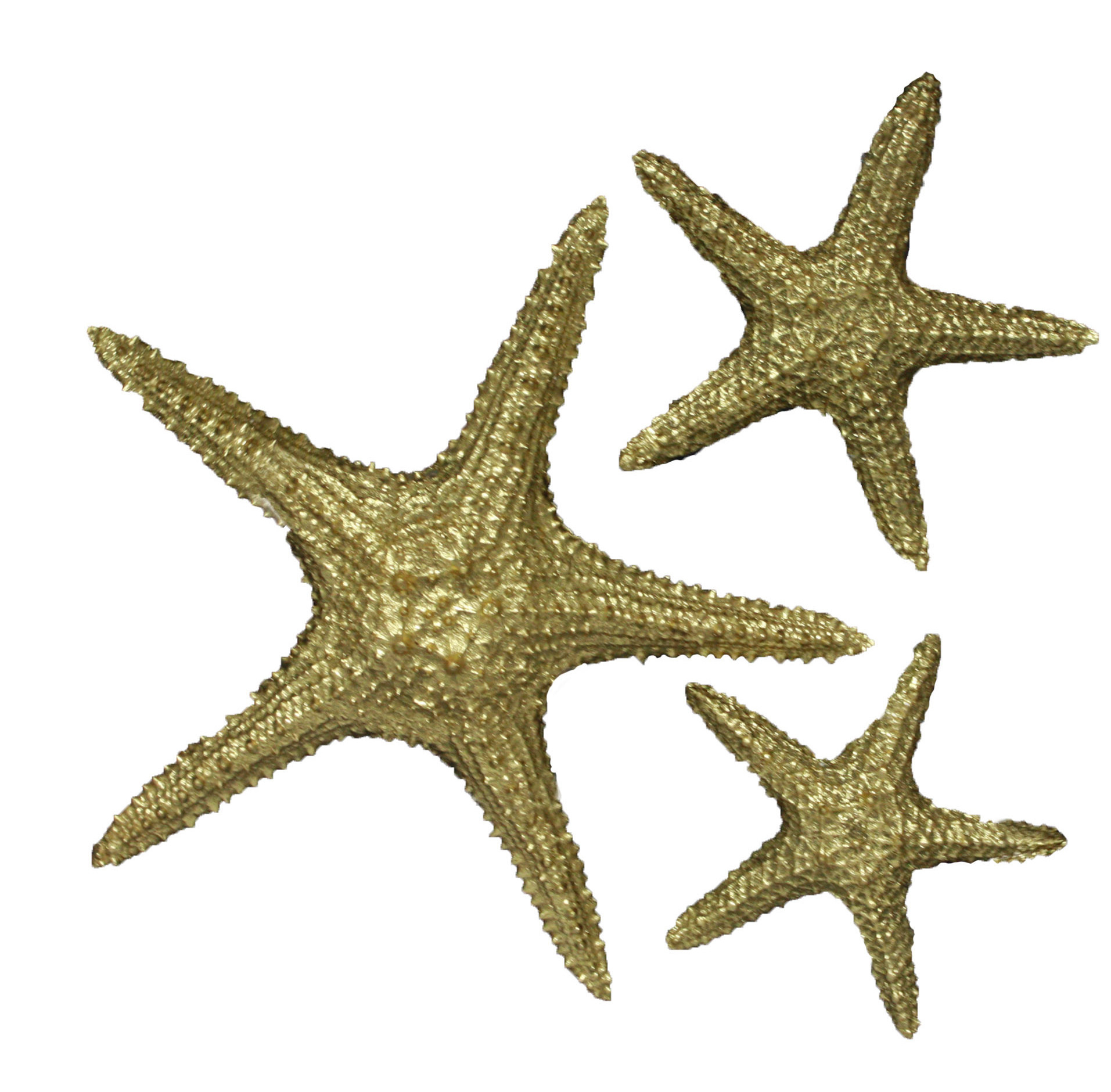 Ebay Within Most Popular Yelton 3 Piece Starfish Wall Decor Sets (View 5 of 20)