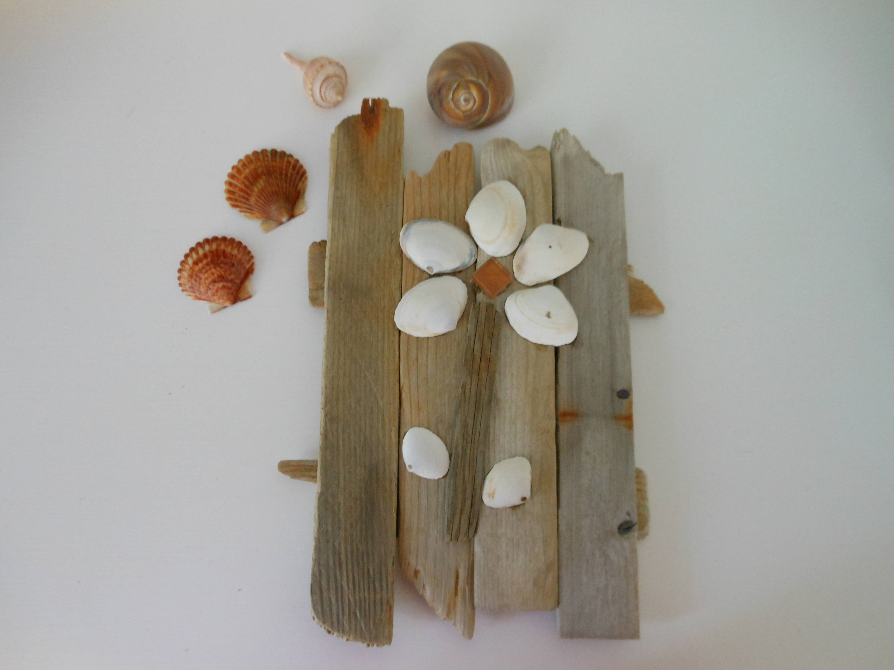 Etsy Throughout Latest Tree Shell Leaves Sculpture Wall Decor (View 3 of 20)