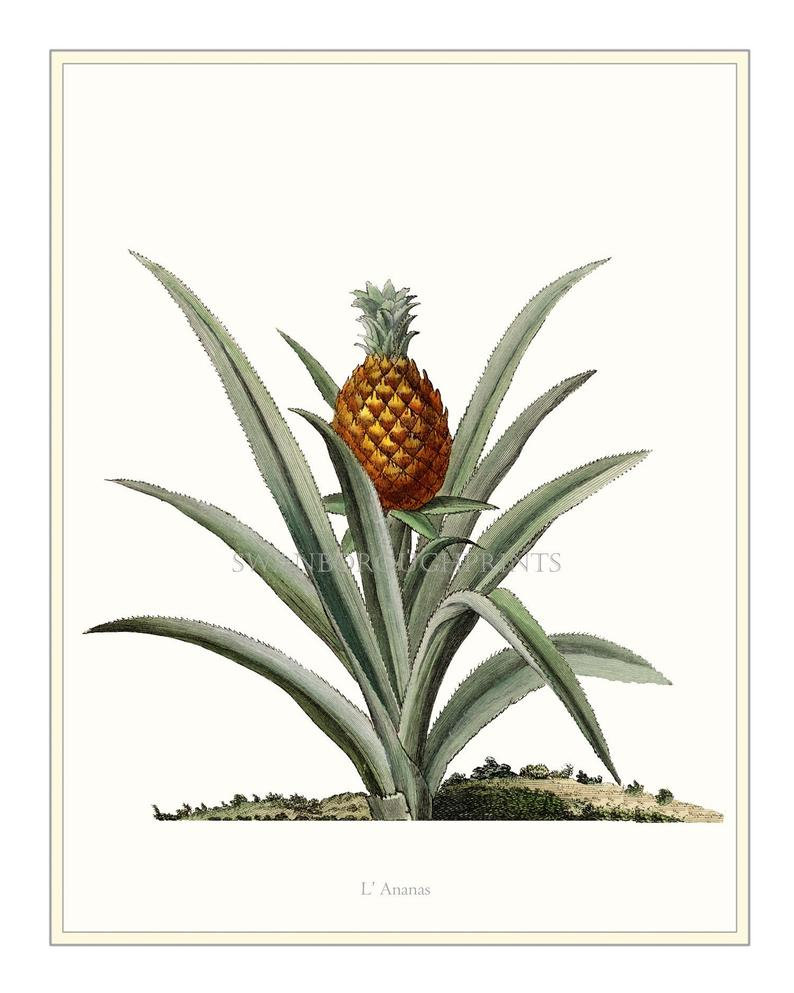 Most Current Pineapple Wall Decor In Pineapple Wall Decor. Pineapple Art Wall Print (View 15 of 20)